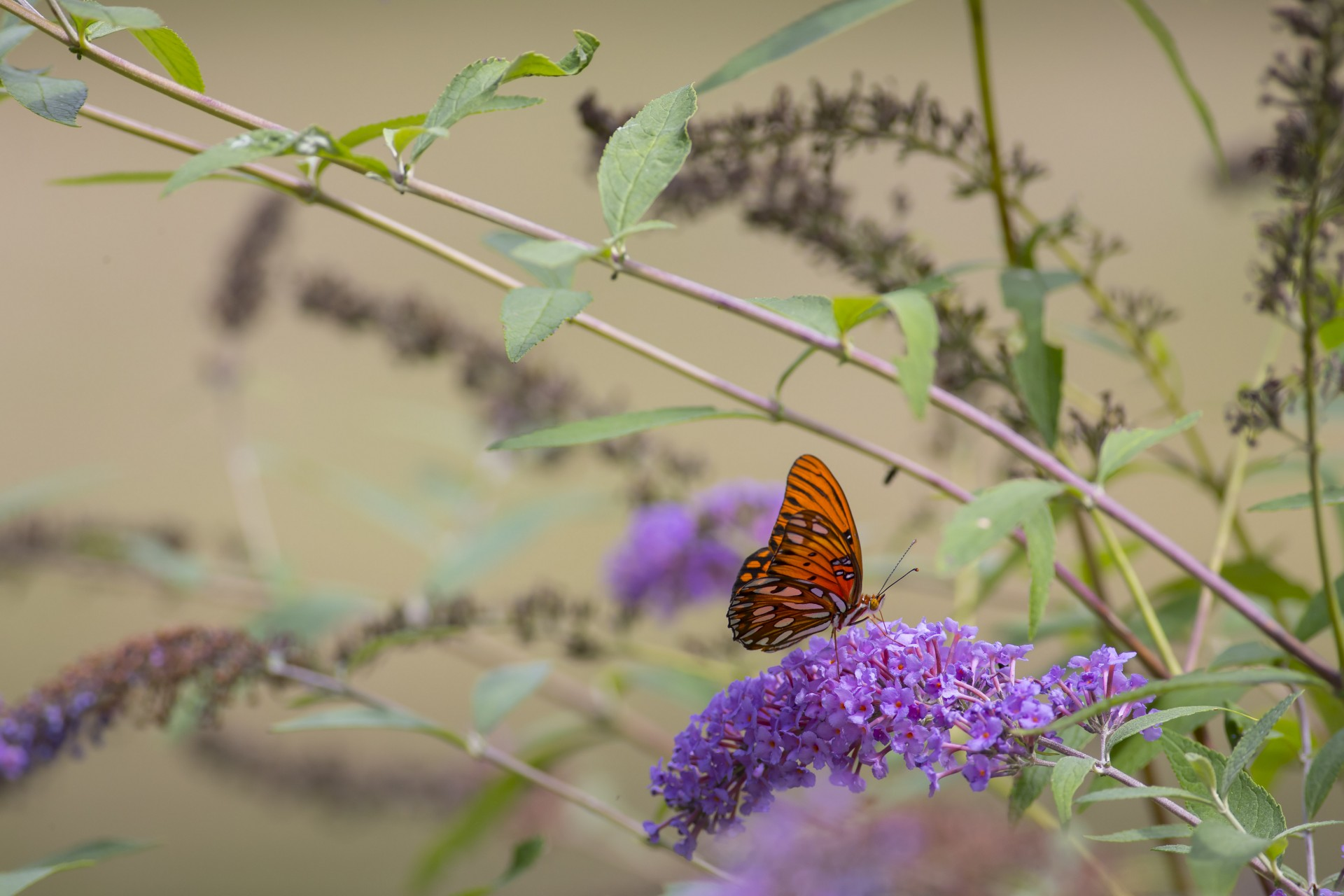 Butterfly and Plants